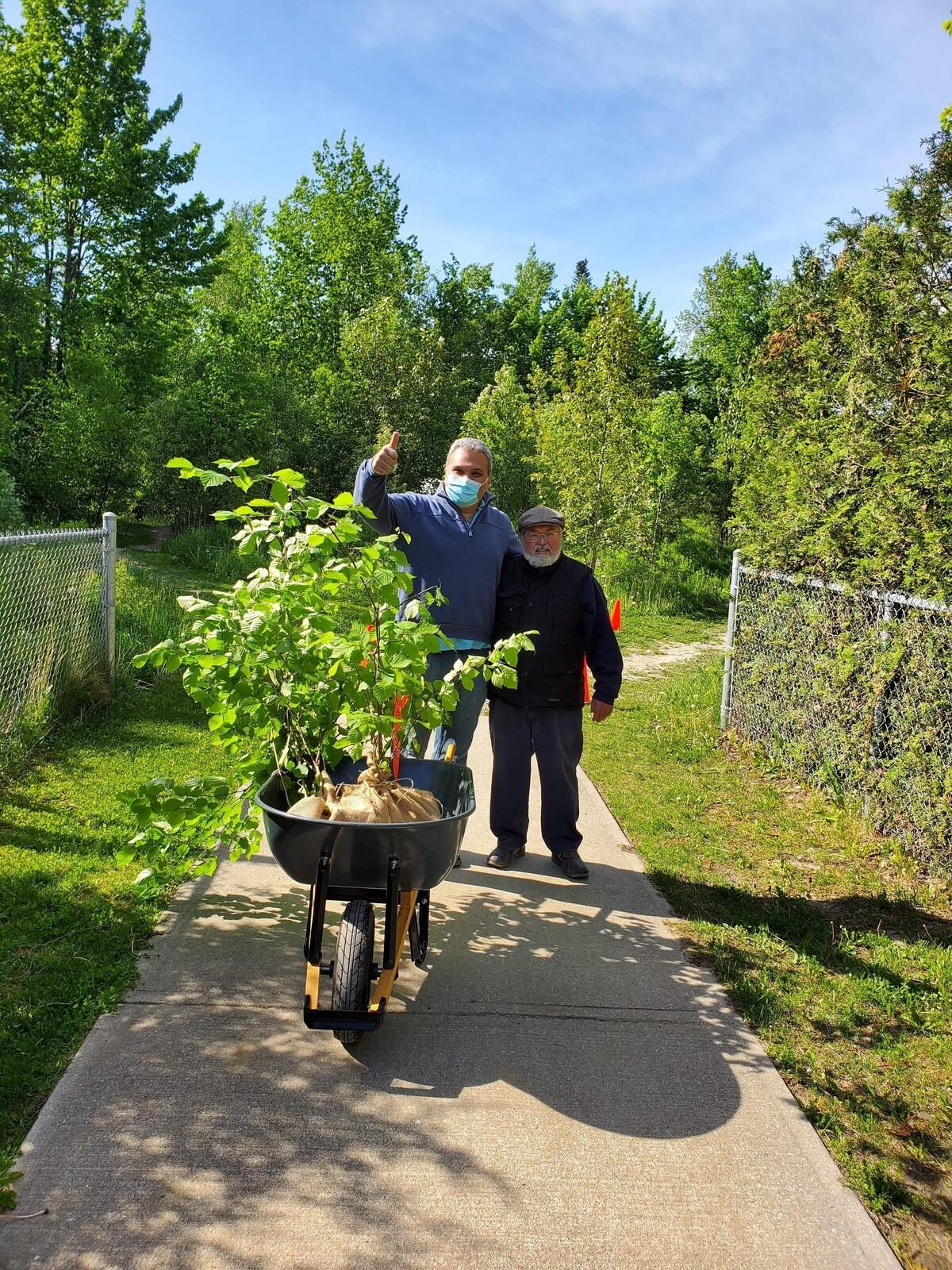 Cueillettes d'arbres et végétaux indigènes
