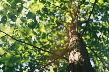 Série de webinaires: Meilleures pratiques en matière de durabilité municipale